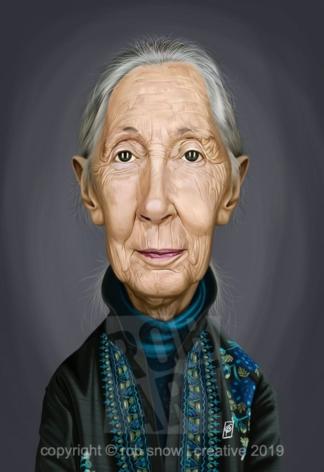 Celebrity Sunday - Jane Goodall
