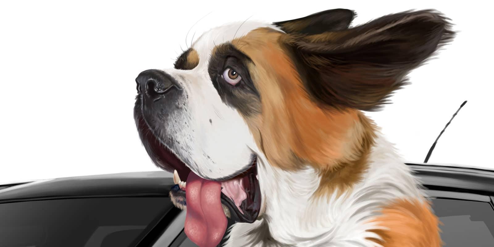 Dog Detail